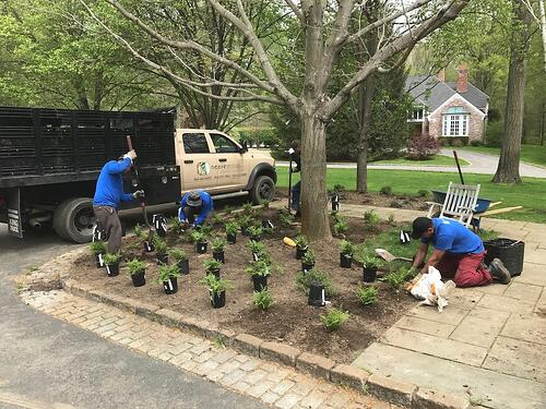 neave-group-outdoor-solutions-planting-3